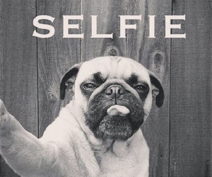 mops and selfie image