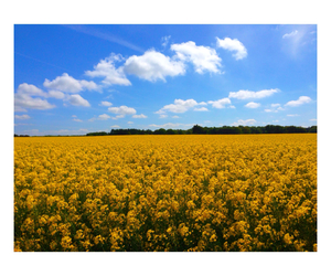 blue, fields, and flowers image