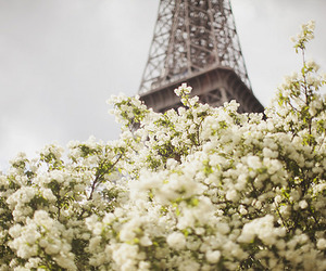 flowers, nature, and paris image
