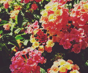 flowers, cute, and happy image