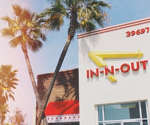 blue sky, palm trees, and burgers image