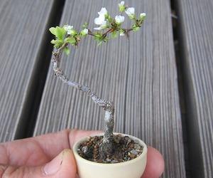 tree, tiny, and bonsai image