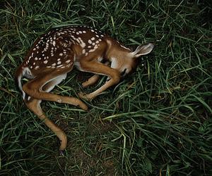 deer, animal, and bambi image