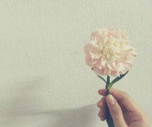 carnation and flower image