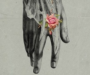 anatomy, rose, and grey image