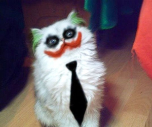 cat, joker, and funny image