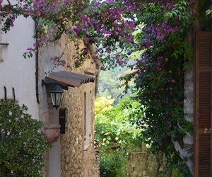 flowers and france image