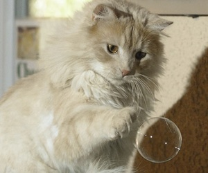 cat and bubble image