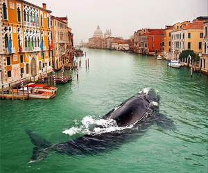 whale, venice, and nature image