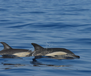 acores, animals, and beautiful image