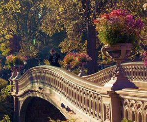 park, bridge, and nature image