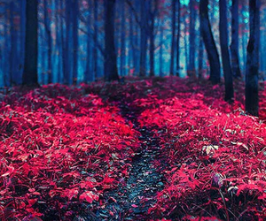 forest and pink image