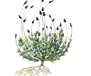 art, plants, and watercolor image
