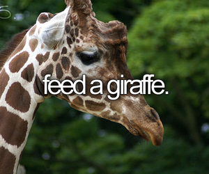 giraffe, animal, and before i die image