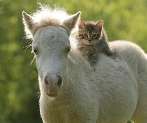cat, animal, and horse image