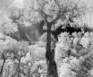 b&w, infrared, and united states image