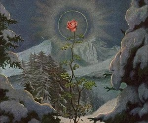 flower, halo, and rose image