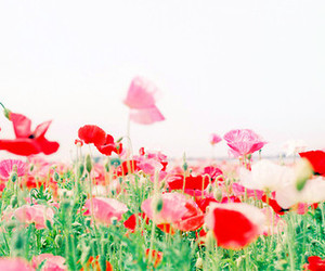 colorful, flowers, and nature image