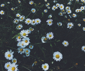 flowers, grunge, and hype image