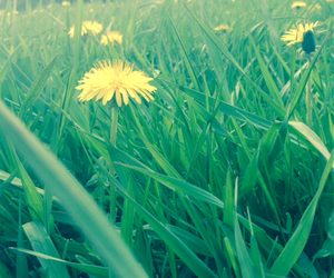 country, dandelions, and flowers image