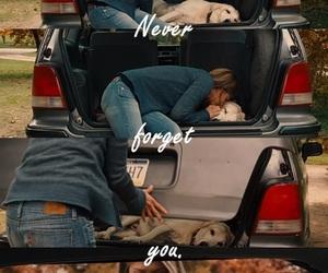 car, cry, and dog image