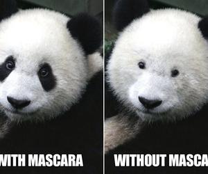 panda, funny, and mascara image