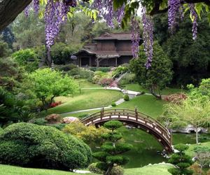 garden, japan, and nature image