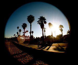 flare, palm trees, and sunset image