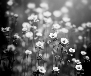 black and white, gloomy, and flowers image