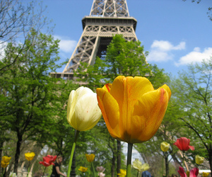 blue, eiffel tower, and flowers image