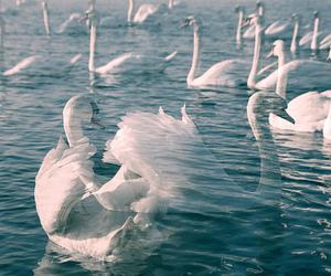 Swan, vintage, and water image