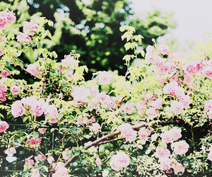 flowers, header, and rose image