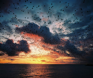 birds, sky, and sunset image