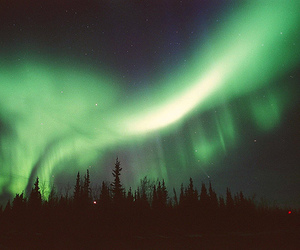 aurora, forest, and green image