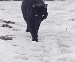 alone, black cat, and snow image