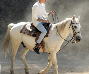 horse, Hot, and bieber image