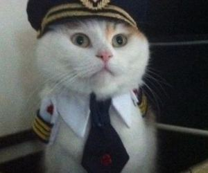 captain, cat, and cats image
