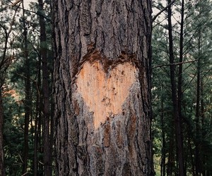 nature and love image
