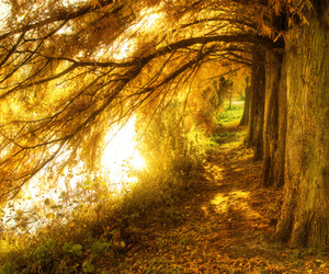 gold, nature, and path image