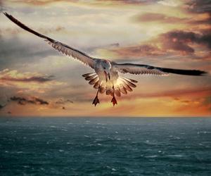 bird, photography, and sea image