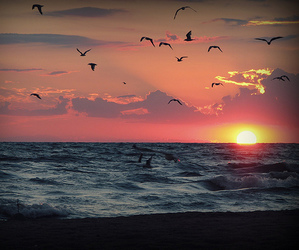 sunset, bird, and sea image