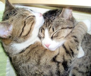 cute, cat, and hug image