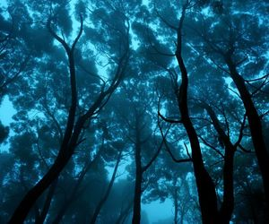 blue, branches, and forest image