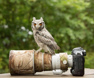 camera, cameras, and feather image