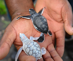 beautiful, turtles, and nature image