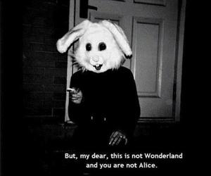 wonderland, alice, and rabbit image