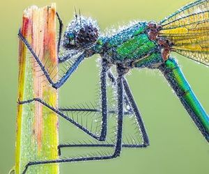 dragonfly and insects image