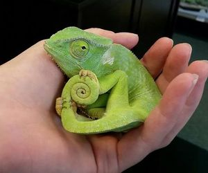cute, chameleon, and green image
