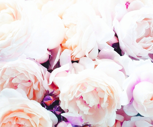 blossom, pretty, and summer image