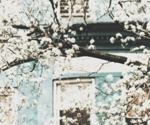 header, flowers, and blue image